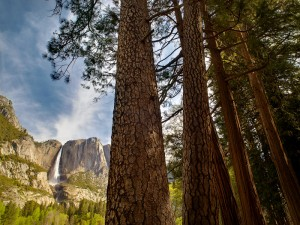 Upper Yosemite Falls and pines, Yosemite National Park