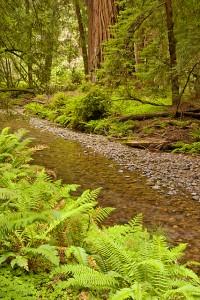 Muir Woods 411