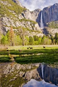 Yosemite NP 343
