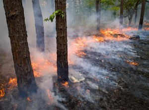 FL-prescribed burn