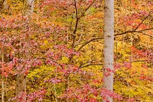 Fishpond Lake trees 553
