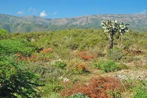 Haiti scenic