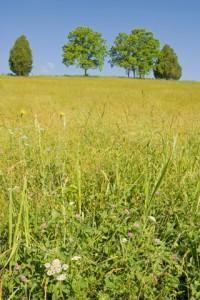 Shaker Meadow