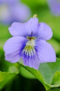 violet 872