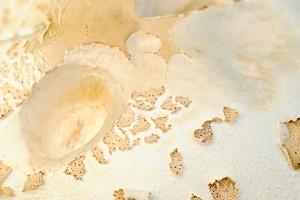 mushroom top 791