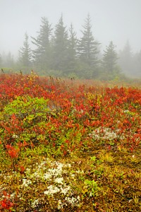 Dolly Sods 431