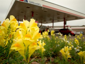 MN flowers + gas station