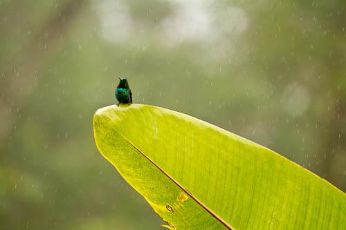 RS-rain-1
