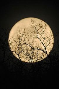 Super Moon 132