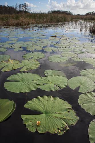 SC Everglades-01