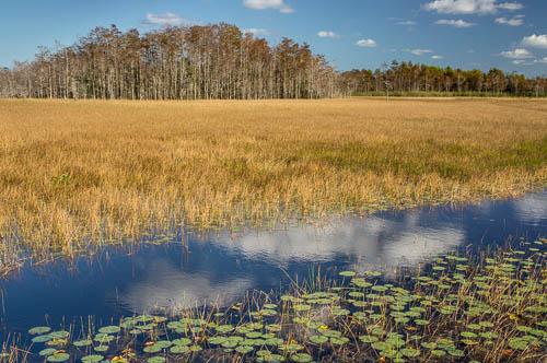 SC Everglades-02