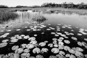 FL Everglades-03