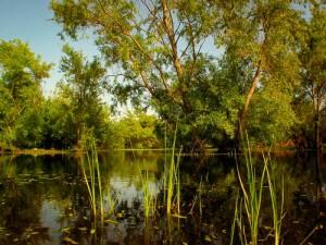 Madrona Marsh, Torrance, CA
