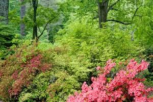 KY Bernheim Forest spring h